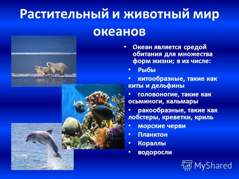 Растительный и животный мир океанов Океан является средой обитания для множества форм жизни; в их числе: Рыбы китообразные, такие как киты и дельфины головоногие, такие как осьминоги, кальмары ракообразные, такие как лобстеры, креветки, криль морские