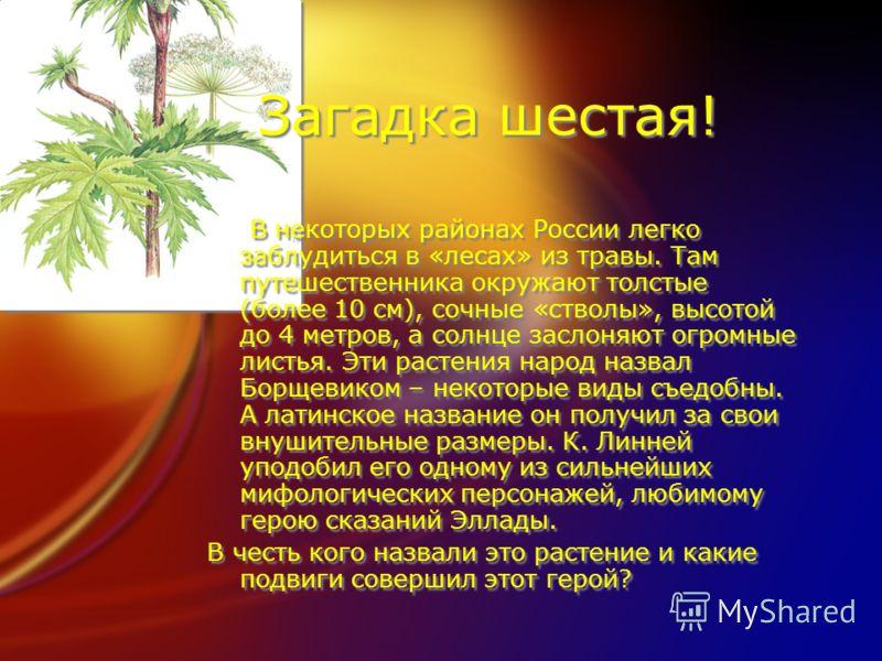 Загадка шестая! В некоторых районах России легко заблудиться в «лесах» из травы. Там путешественника окружают толстые (более 10 см), сочные «стволы», высотой до 4 метров, а солнце заслоняют огромные листья. Эти растения народ назвал Борщевиком – неко