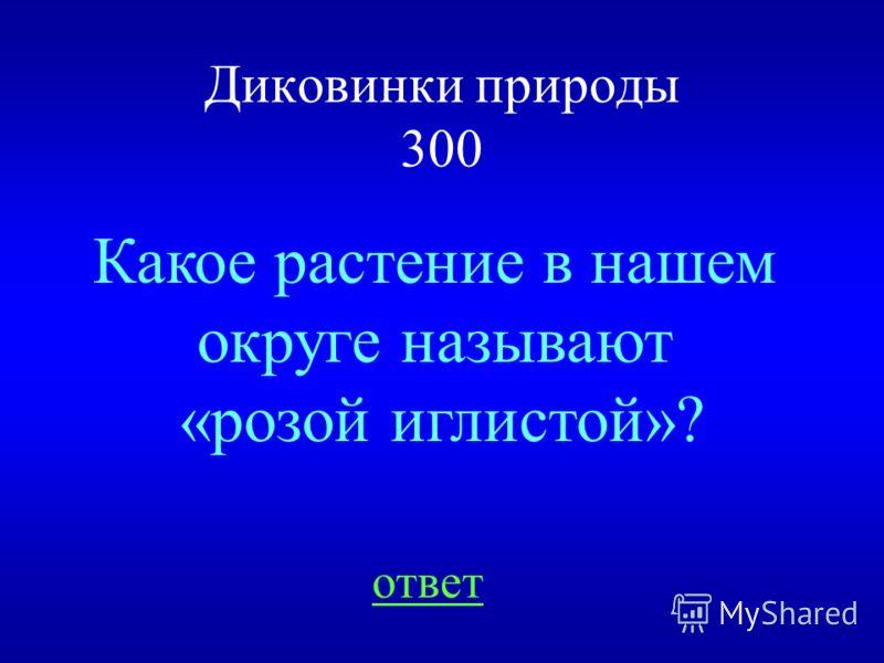 НАЗАД ВЫХОД Чага 200