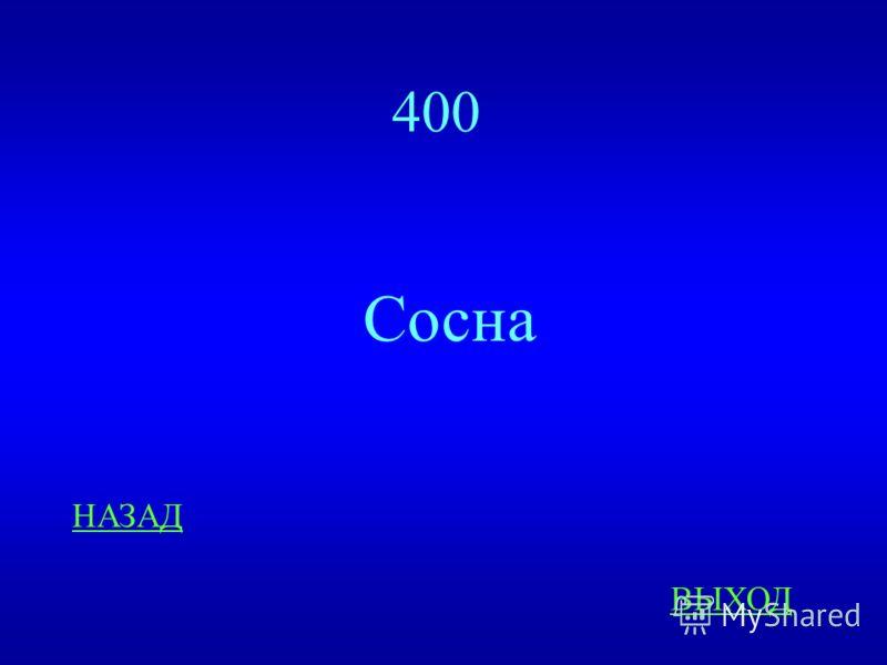 Диковинки природы 400 ответ Какое растение занимает ведущее место на реке Конда?