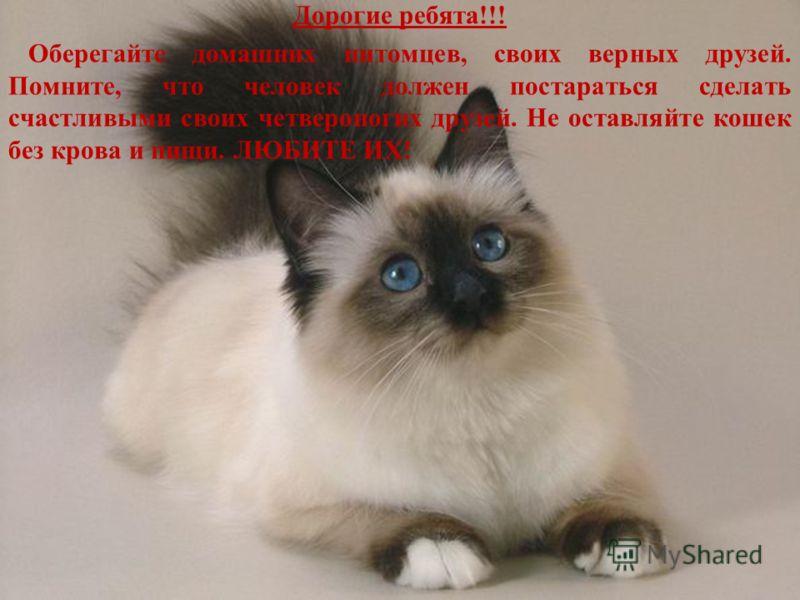 Дорогие ребята!!! Оберегайте домашних питомцев, своих верных друзей. Помните, что человек должен постараться сделать счастливыми своих четвероногих друзей. Не оставляйте кошек без крова и пищи. ЛЮБИТЕ ИХ!