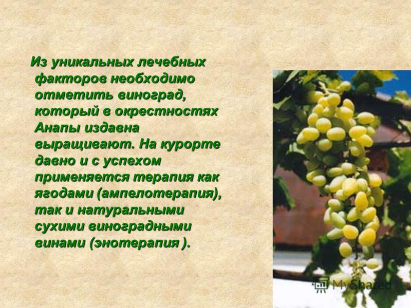 Из уникальных лечебных факторов необходимо отметить виноград, который в окрестностях Анапы издавна выращивают. На курорте давно и с успехом применяется терапия как ягодами (ампелотерапия), так и натуральными сухими виноградными винами (энотерапия ).
