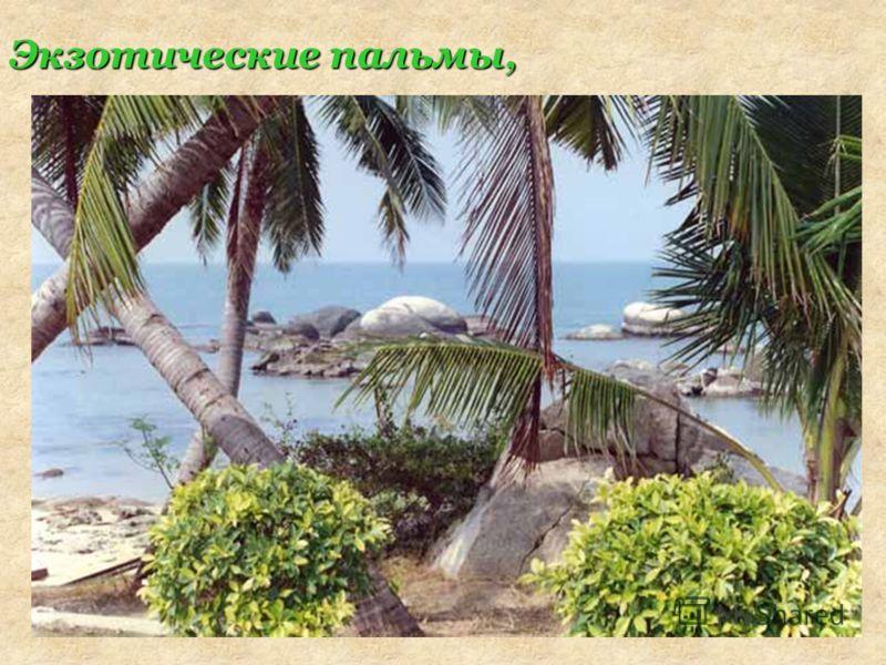 Экзотические пальмы,