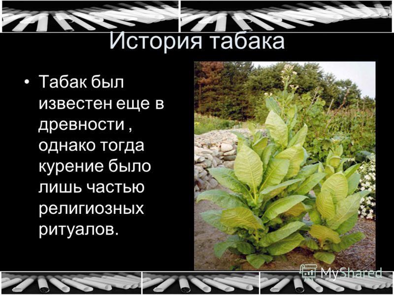 История табака Табак был известен еще в древности, однако тогда курение было лишь частью религиозных ритуалов.