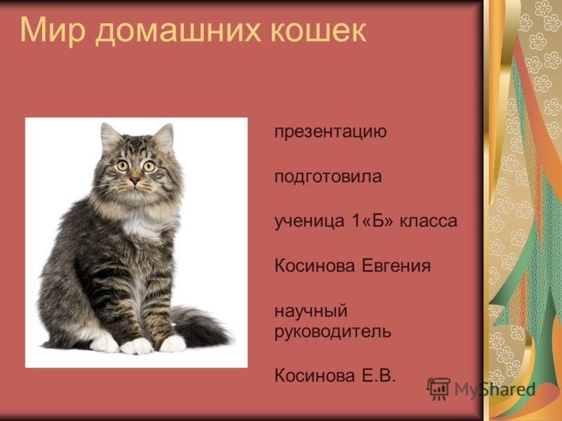 Мир домашних кошек презентацию подготовила ученица 1«Б» класса Косинова Евгения научный руководитель Косинова Е.В.