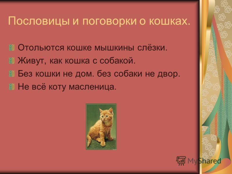 Пословицы и поговорки о кошках. Отольются кошке мышкины слёзки. Живут, как кошка с собакой. Без кошки не дом. без собаки не двор. Не всё коту масленица.