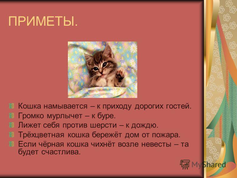 Породы Кошек Презентация