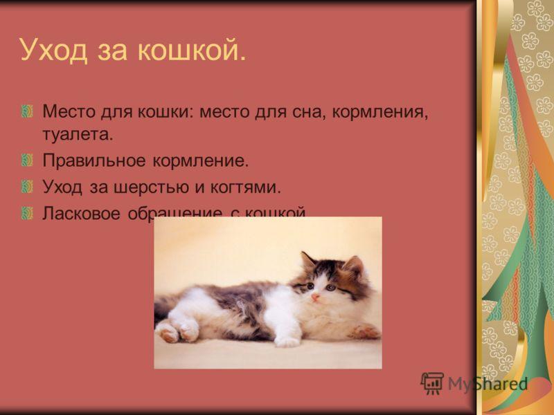 Уход за кошкой. Место для кошки: место для сна, кормления, туалета. Правильное кормление. Уход за шерстью и когтями. Ласковое обращение с кошкой.