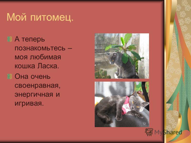 Мой питомец. А теперь познакомьтесь – моя любимая кошка Ласка. Она очень своенравная, энергичная и игривая.
