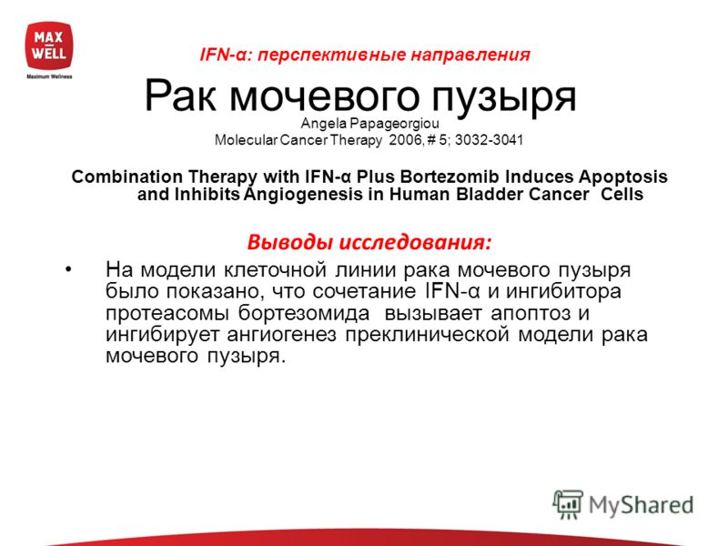 Angela Papageorgiou Molecular Cancer Therapy 2006, # 5; 3032-3041 Combination Therapy with IFN-α Plus Bortezomib Induces Apoptosis and Inhibits Angiogenesis in Human Bladder Cancer Cells Выводы исследования: На модели клеточной линии рака мочевого пу