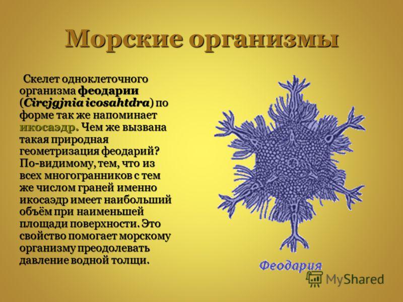 Морские организмы Скелет одноклеточного организма феодарии (Circjgjnia icosahtdra) по форме так же напоминает икосаэдр. Чем же вызвана такая природная геометризация феодарий? По-видимому, тем, что из всех многогранников с тем же числом граней именно