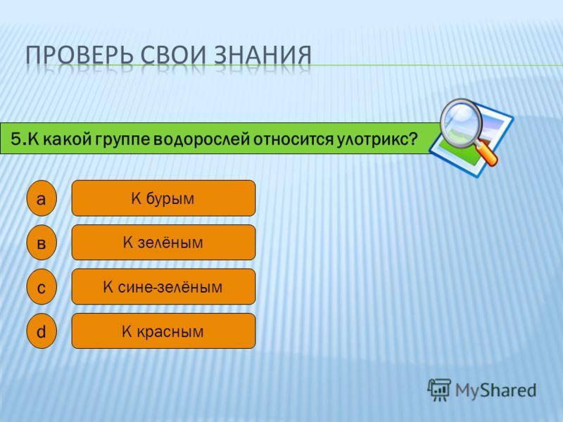 5.К какой группе водорослей относится улотрикс? а в с d К бурым К зелёным К сине-зелёным К красным