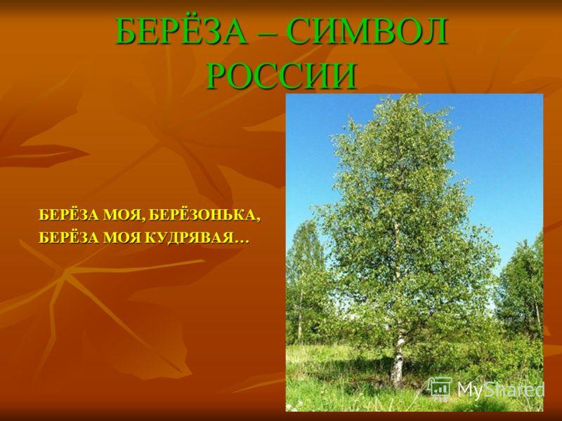 БЕРЁЗА – СИМВОЛ РОССИИ БЕРЁЗА МОЯ, БЕРЁЗОНЬКА, БЕРЁЗА МОЯ КУДРЯВАЯ…