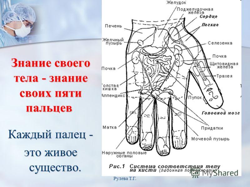 Знание своего тела - знание своих пяти пальцев Знание своего тела - знание своих пяти пальцев Каждый палец - это живое существо. Рулева Т.Г.