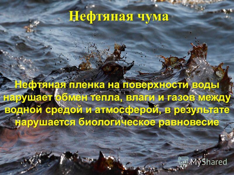 Нефтяная чума Нефтяная пленка на поверхности воды нарушает обмен тепла, влаги и газов между водной средой и атмосферой, в результате нарушается биологическое равновесие