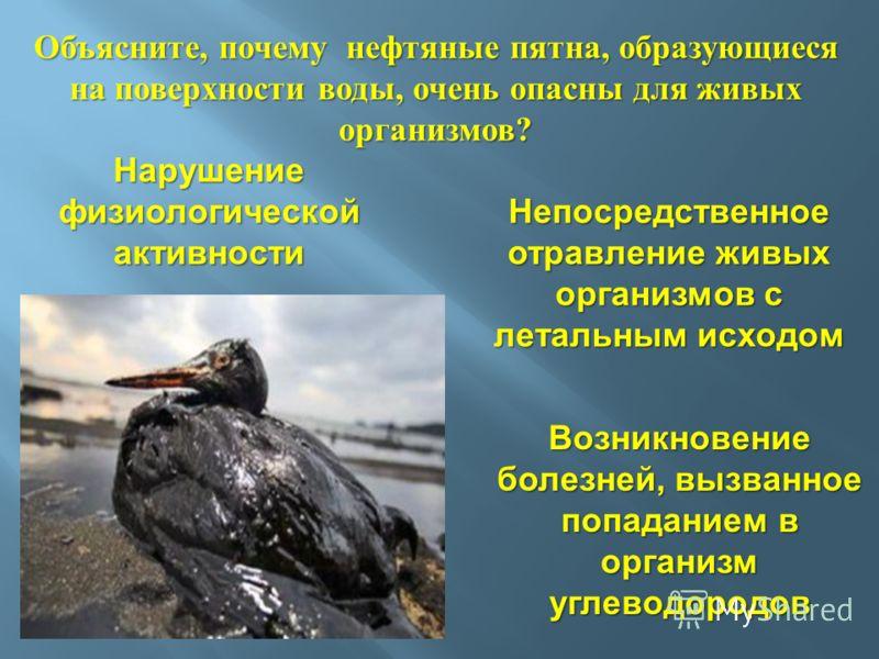 Непосредственное отравление живых организмов с летальным исходом Нарушение физиологической активности Возникновение болезней, вызванное попаданием в организм углеводородов Объясните, почему нефтяные пятна, образующиеся на поверхности воды, очень опас