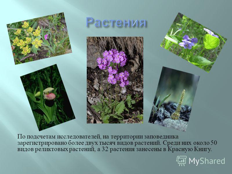 По подсчетам исследователей, на территории заповедника зарегистрировано более двух тысяч видов растений. Среди них около 50 видов реликтовых растений, а 32 растения занесены в Красную Книгу.