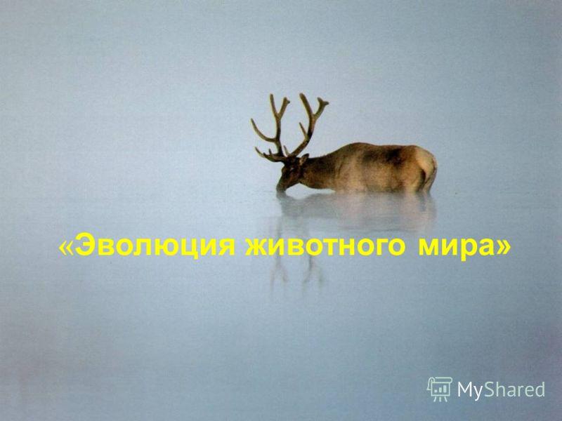 « Эволюция животного мира»