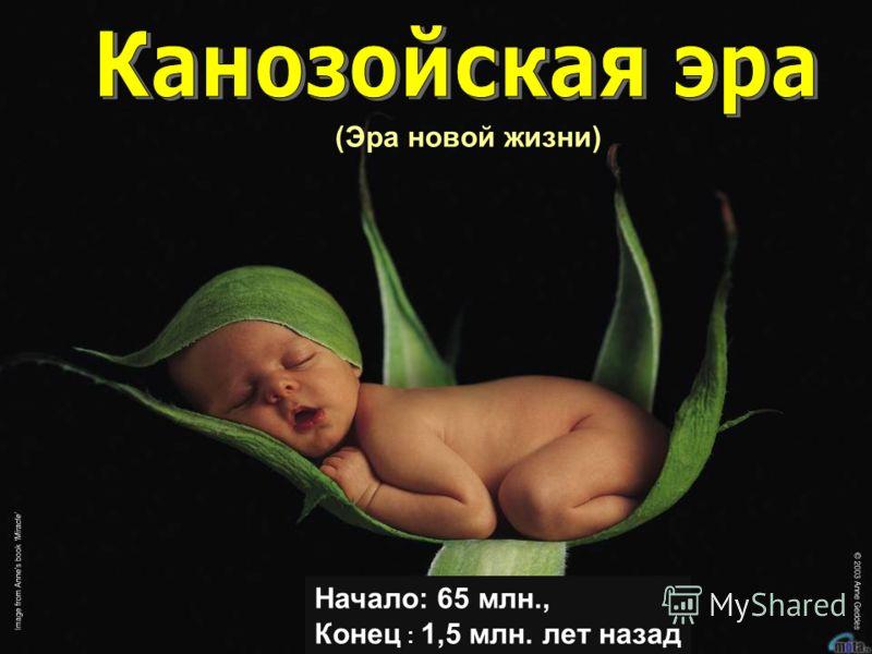 (Эра новой жизни) Начало: 65 млн., Конец : 1,5 млн. лет назад