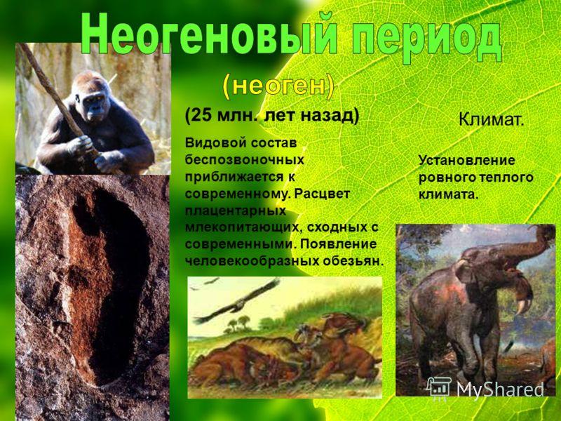 (25 млн. лет назад) Видовой состав беспозвоночных приближается к современному. Расцвет плацентарных млекопитающих, сходных с современными. Появление человекообразных обезьян. Климат. Установление ровного теплого климата.