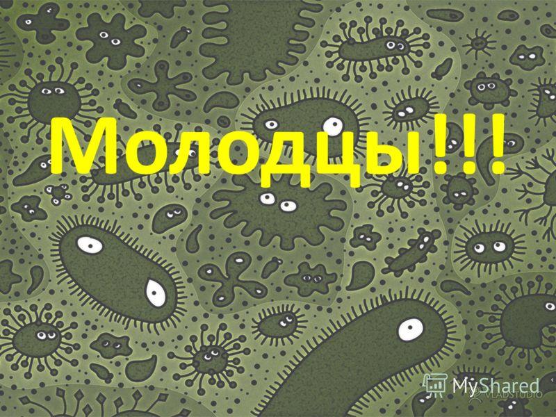 Вирусы являются неклеточными формами жизни?? а) да б)нет а) да б)нет