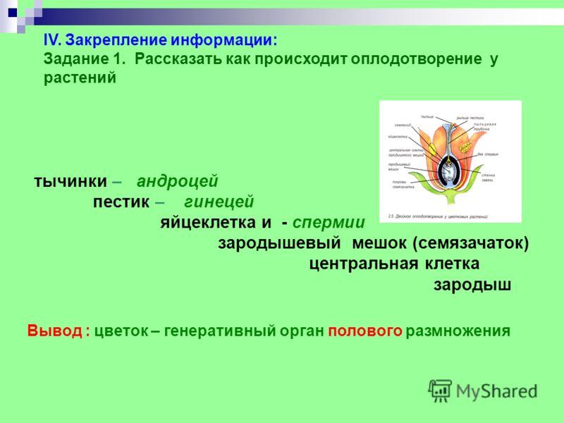 IV. Закрепление информации: Задание 1. Рассказать как происходит оплодотворение у растений тычинки – андроцей пестик – гинецей яйцеклетка и - спермии зародышевый мешок (семязачаток) центральная клетка зародыш Вывод : цветок – генеративный орган полов