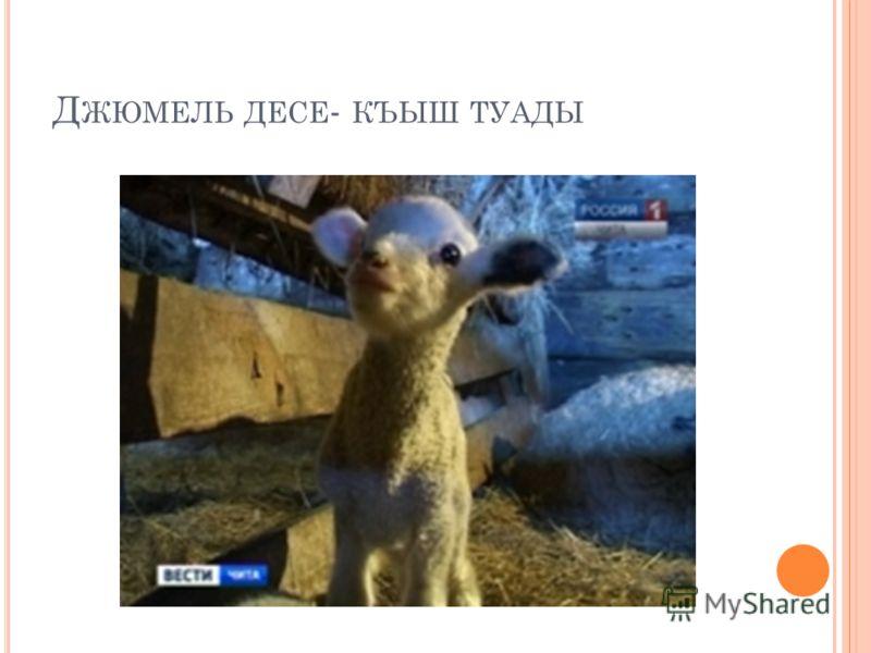 Д ЖЮМЕЛЬ ДЕСЕ - КЪЫШ ТУАДЫ