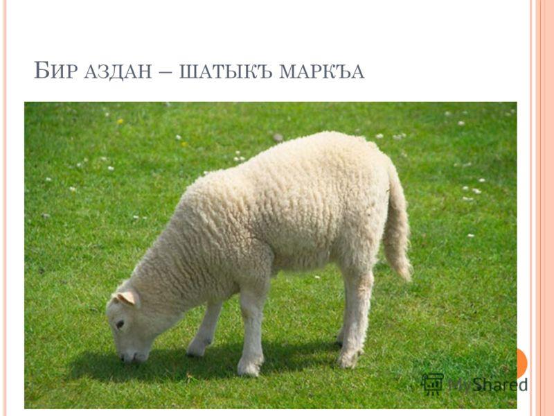 Б ИР АЗДАН – ШАТЫКЪ МАРКЪА