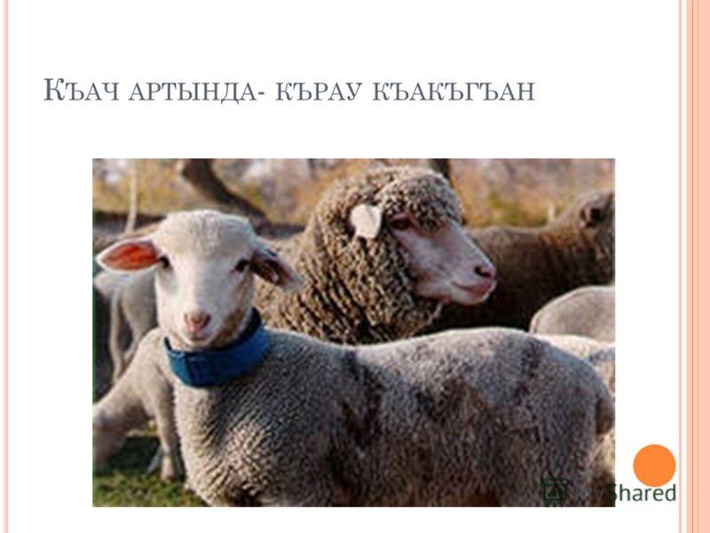 К ЪАЧ АРТЫНДА - КЪРАУ КЪАКЪГЪАН