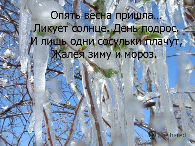 Опять весна пришла… Ликует солнце. День подрос. И лишь одни сосульки плачут, Жалея зиму и мороз.
