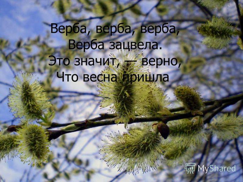 Верба, верба, верба, Верба зацвела. Это значит, верно, Что весна пришла Верба, верба, верба, Верба зацвела. Это значит, верно, Что весна пришла
