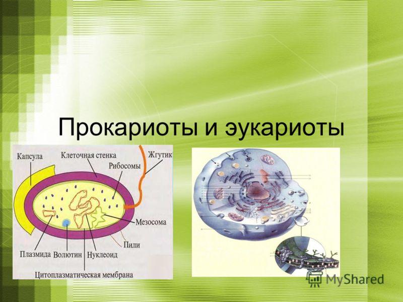 Прокариоты и эукариоты