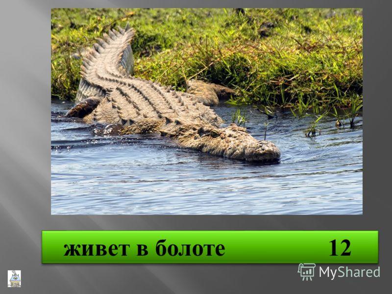 живет в болоте 12