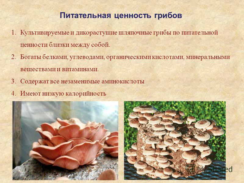Питательная ценность грибов 1.Культивируемые и дикорастущие шляпочные грибы по питательной ценности близки между собой. 2.Богаты белками, углеводами, органическими кислотами, минеральными веществами и витаминами. 3.Содержат все незаменимые аминокисло