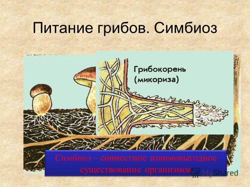 Питание грибов. Симбиоз Симбиоз – совместное взаимовыгодное существование организмов
