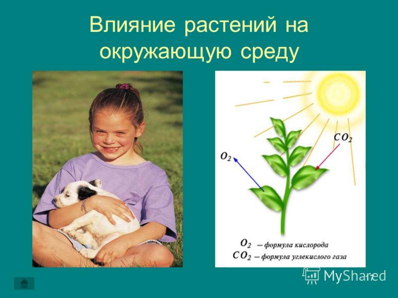 17 Влияние растений на окружающую среду