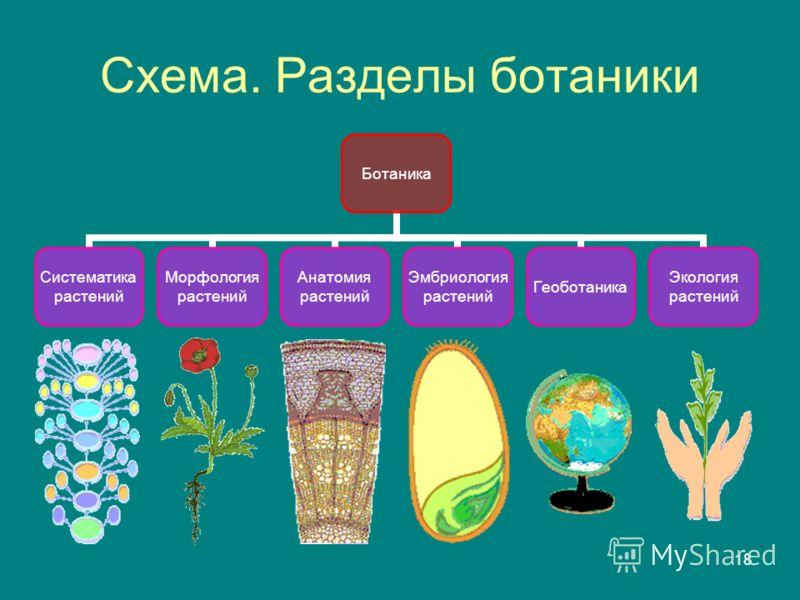 18 Схема. Разделы ботаники Ботаника Систематика растений Морфология растений Анатомия растений Эмбриология растений Геоботаника Экология растений