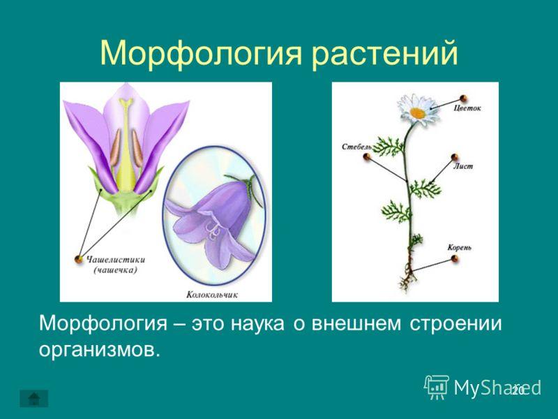 20 Морфология растений Морфология – это наука о внешнем строении организмов.