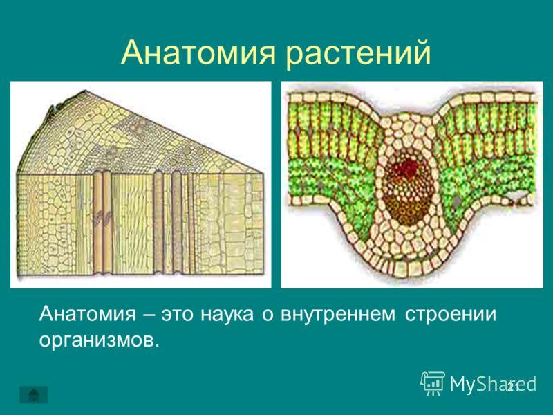 21 Анатомия растений Анатомия – это наука о внутреннем строении организмов.