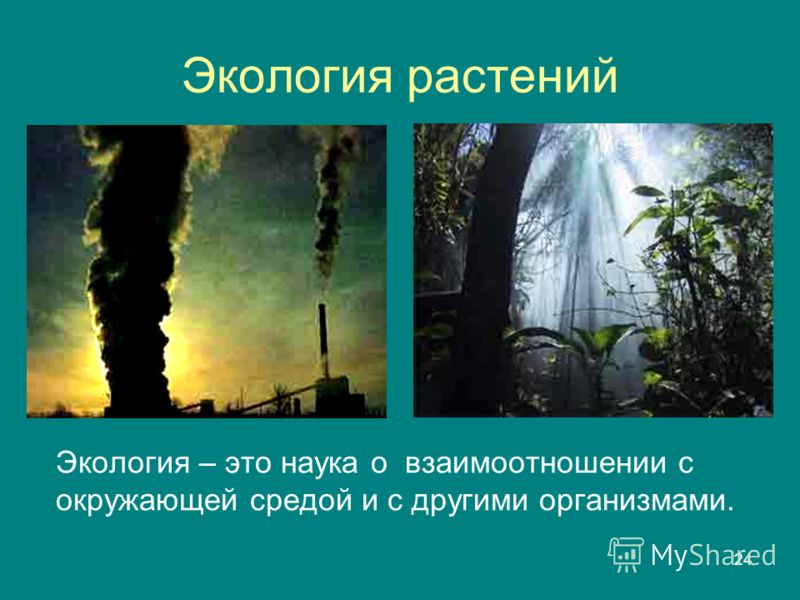 Растений экология – это наука