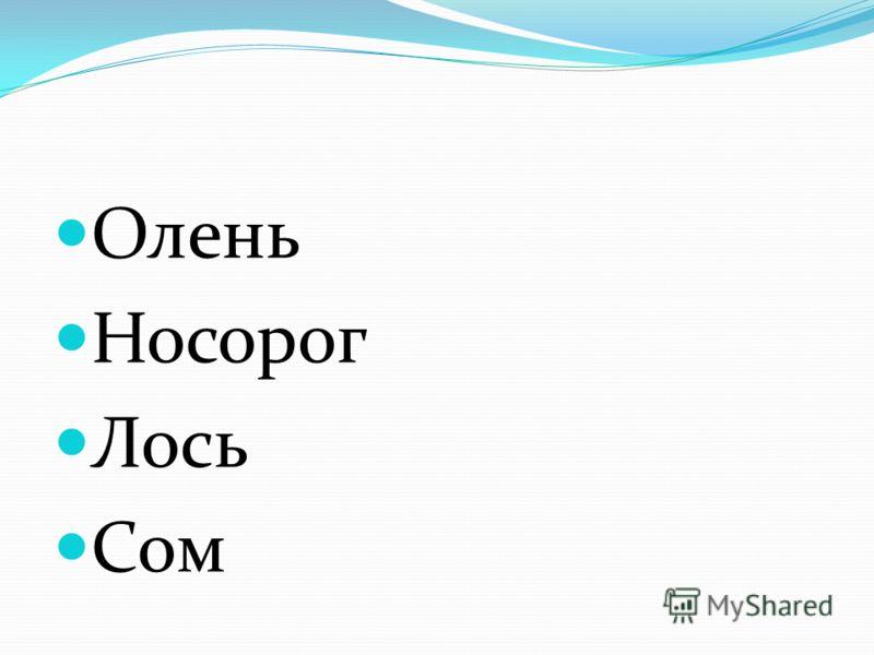 Олень Носорог Лось Сом