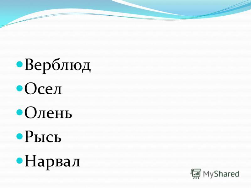 Верблюд Осел Олень Рысь Нарвал