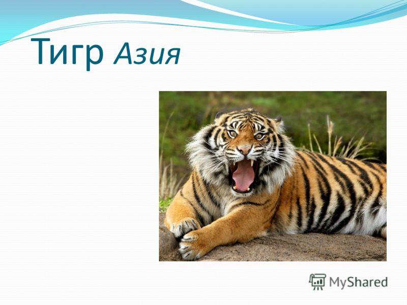 Тигр Азия