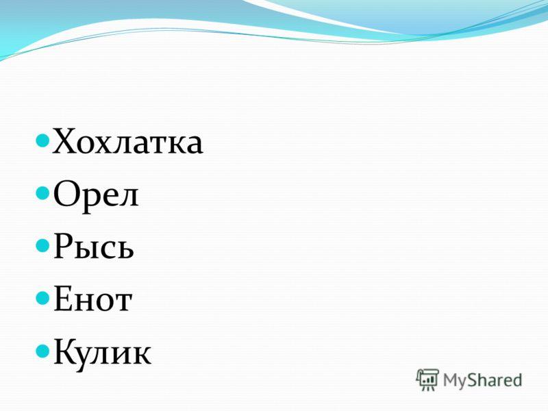 Хохлатка Орел Рысь Енот Кулик