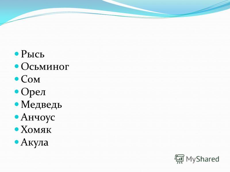 Рысь Осьминог Сом Орел Медведь Анчоус Хомяк Акула