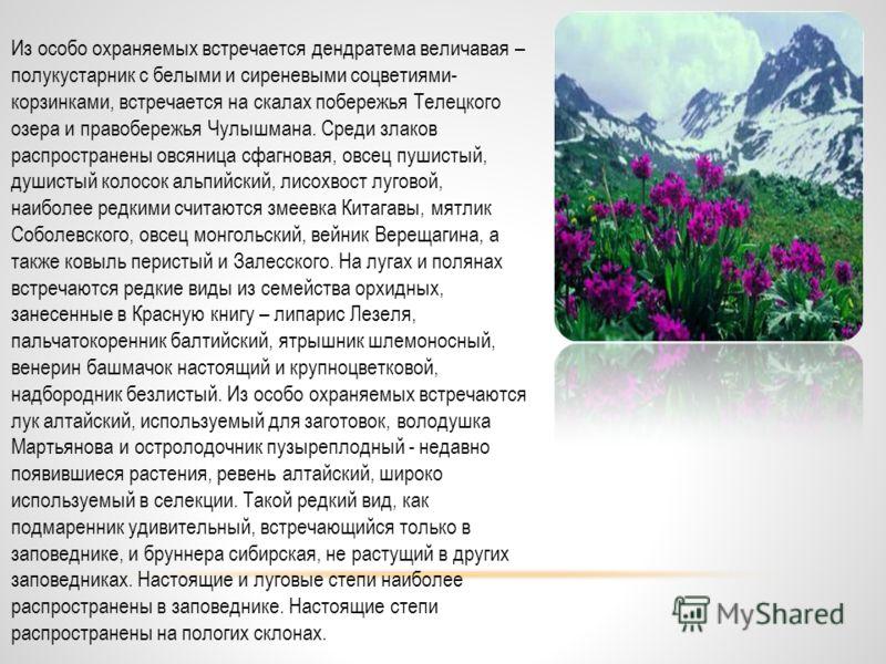 Природа Алтайского заповедника Климат носит континентальный характер, обусловленный положением заповедника вблизи Азии, однако в различных частях климатические условия неодинаковы. Например, в северной части лето теплое и влажное, зимы снежные и мягк