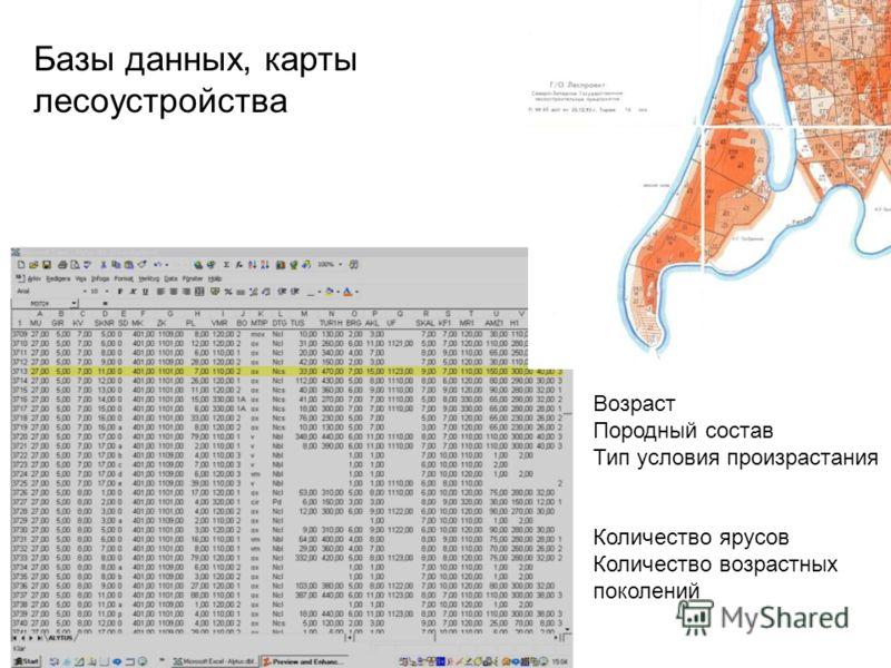 Базы данных, карты лесоустройства Возраст Породный состав Тип условия произрастания Количество ярусов Количество возрастных поколений