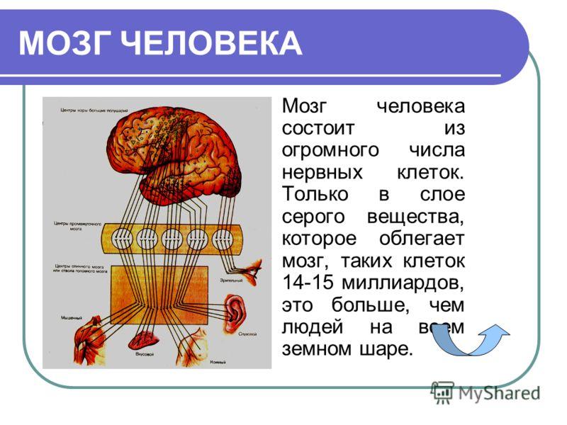 Твоими мыслями, движениями, чувствами управляет – важнейший орган тела. У некоторых животных, например рыб, он не больше маленького зернышка. У кошек, собак, обезьян он гораздо больше. У человека это большой и сложнейший «аппарат», который позволяет