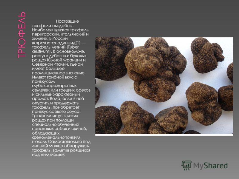 Настоящие трюфели съедобны. Наиболее ценятся трюфель перигорский, итальянский и зимний. В России встречается один вид[1] трюфель летний (Tuber aestivum). В основном же, растут в дубовых и буковых рощах Южной Франции и Северной Италии, где он имеет бо