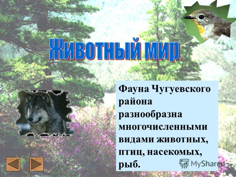 Фауна Чугуевского района разнообразна многочисленными видами животных, птиц, насекомых, рыб.